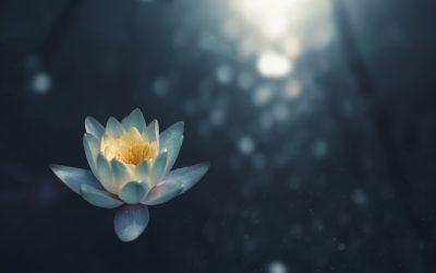Manejo del Estrés: Meditación